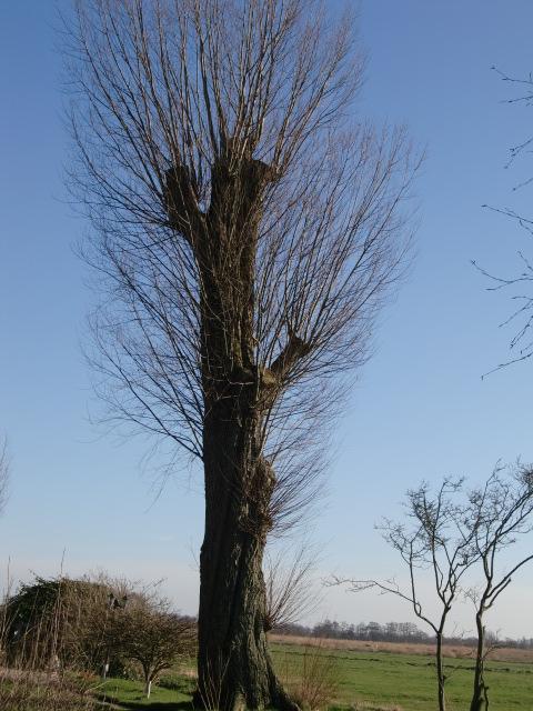 bomen op locatie